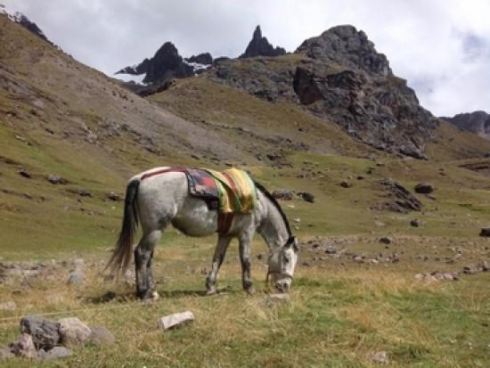 Circuit Pérou Trek de l'Ausangate