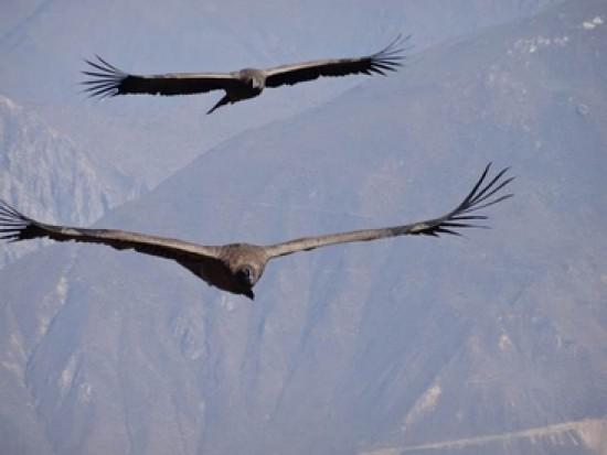 Circuit Pérou Croix du Condor Colca