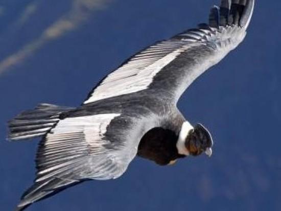Circuit Pérou Croix du Condor Arequipa